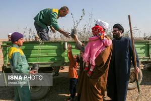 درختی که کاشتنش در تهران ممنوع است