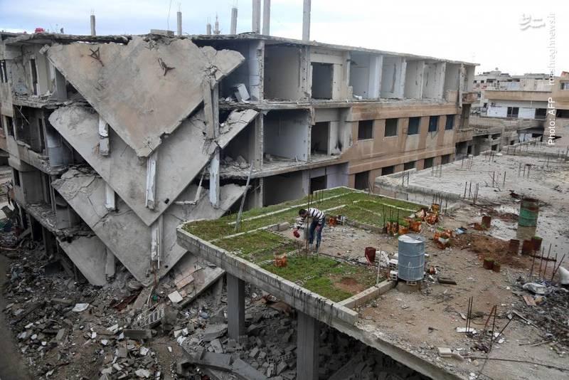 پرورش فضای سبز بر بام ساختمان مخروبه در غوطه شرقی دمشق- آژانس خبری فرانسه