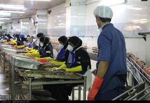 اشتغال سه هزار نفر در تولید تن ماهی چابهار وکنارک