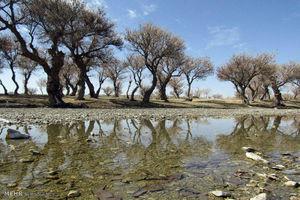 عکس/ جنگل زیبای پدگان در سیستان و بلوچستان
