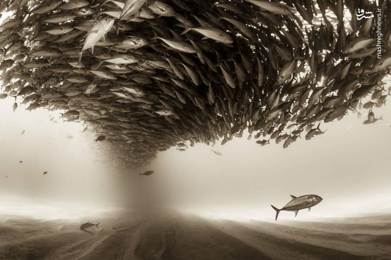 عکسی شگفت انگیز از کف دریا