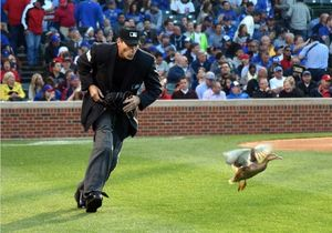 عکس/ اردکی که بازی بیس بال را تعطیل کرد