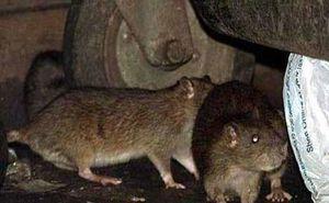 آخرین وضعیت موشهای شهر تهران