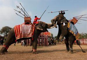عکس /مبارزه مردان فیلسوار در روز ملی فیلها