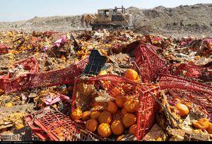 عکس/ امحاء 7 تن میوه قاچاق در مشهد