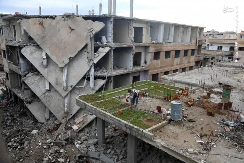 پرورش فضای سبز بر بام ساختمان مخروبه در غوطه شرقی دمشق