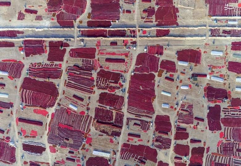 تصویر هوایی از منطقهای در ایغور چین که زمینهای کشاورزی آن به تازگی درو شده است