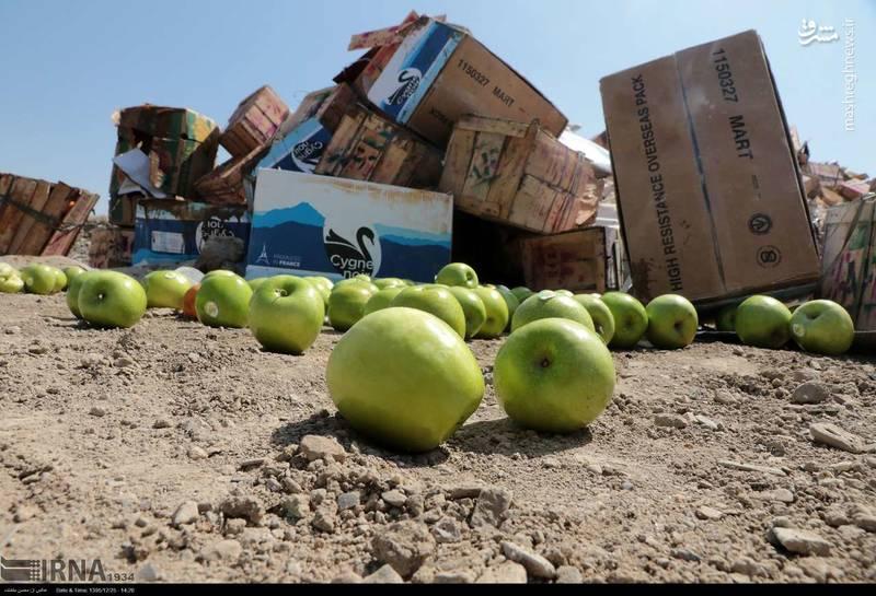 امحاء 7 تن میوه قاچاق در مشهد