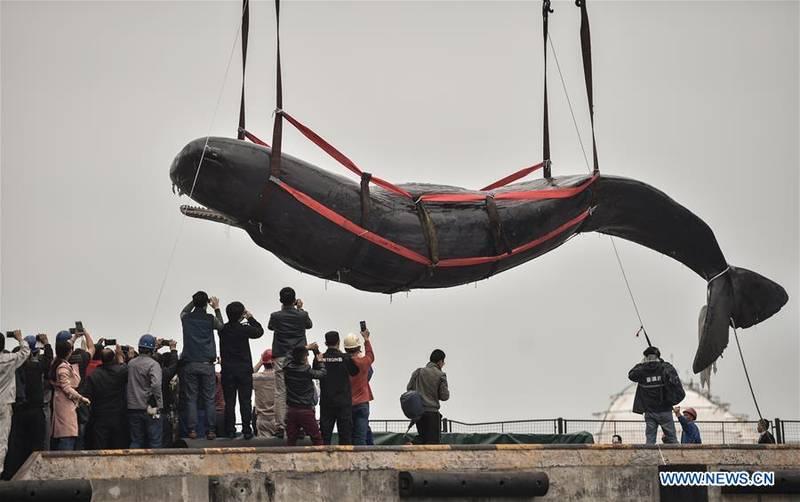 آزاد کردن یک وال عظیم الجثه در چین