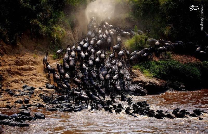 مهاجرت بزرگ در عکس روز نشنال جئوگرافیک