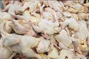 قیمت مرغ منجمد به ۵۷۰۰ تومان رسید