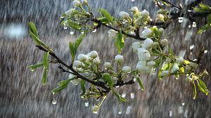 شروع دوباره بارشها از عصر امروز