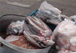 کدام فروشگاه زنجیرهای در تهران گوشت فاسد میفروخت؟ + فیلم و تصاویر