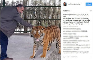 ببر، مهران رجبی را گاز گرفت +عکس