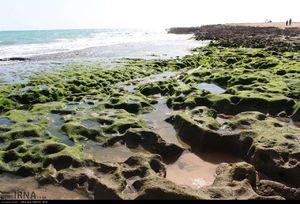 ساحل صخره ای و مرجانی چابهار