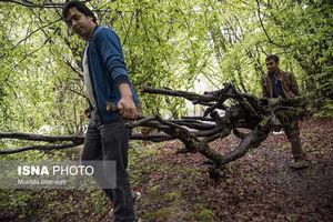 عکس/  روز آشتی با طبیعت در شهرستان ها