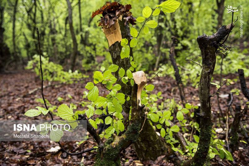 تخریب طبیعت در روز طبیعت