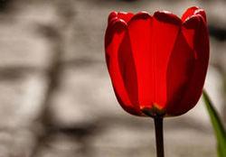 متن نوحه ترکی - نوید آسال اردبیلی