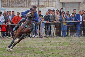 عکس/ مهارت فردی اسب سوار ایرانی