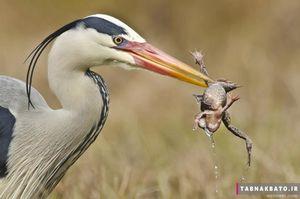 عکس/ شکار لحظه ها از دنیای پرندگان