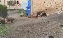 کشته شدن ۲ انتحاری در جنوب شهر تکریت
