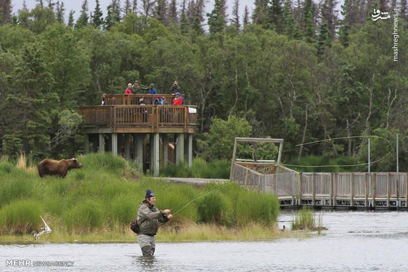 دیدنی های آلاسکا
