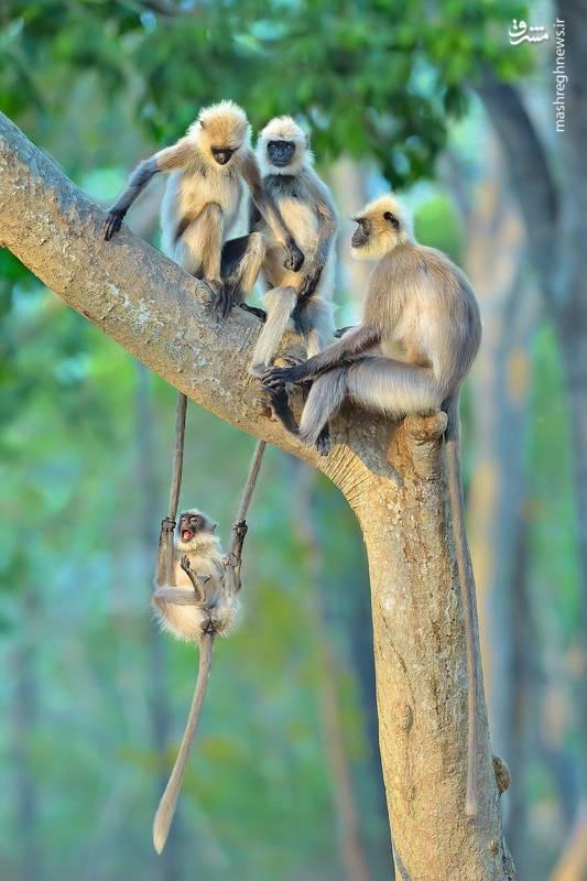تفریحات کوچک-عکس: Thomas Vijayan