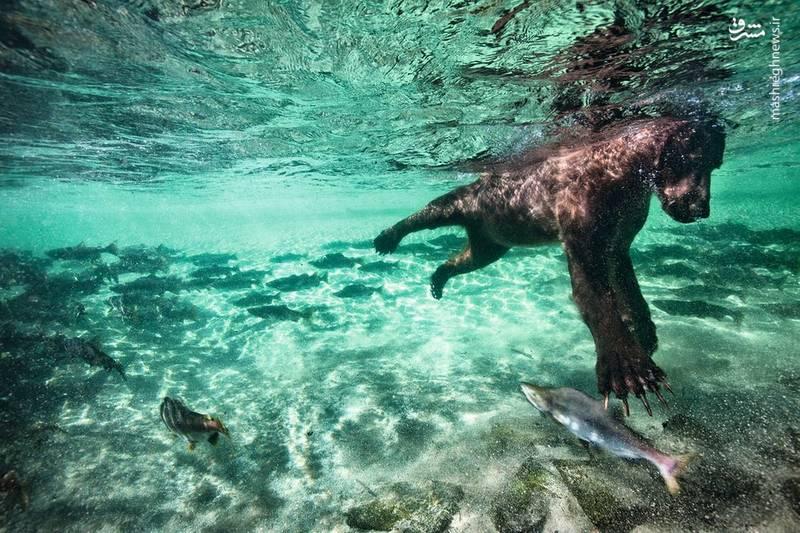 شکارماهی-عکس:Paul Souders