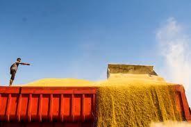 واردات 15 میلیون تن گندم به کشور در دولت یازدهم
