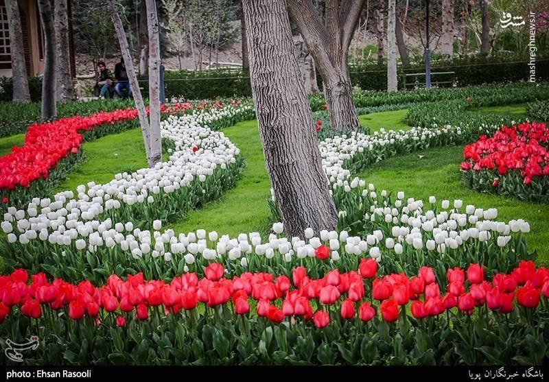 جشنواره لاله ها در کرج