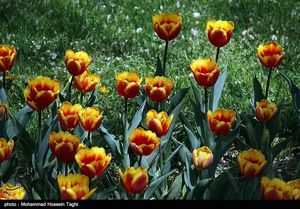 جشنواره گل