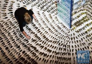 عکس/ پرندگان جانباخته در برخورد با ساختمانهای شیشهای