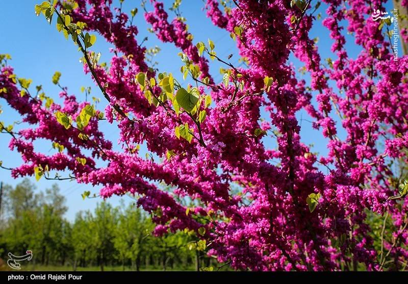 تصاویر از طبیعت زیبای بهاری