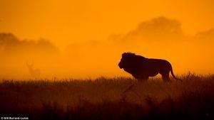 عکسهای طلایی از حیات وحش
