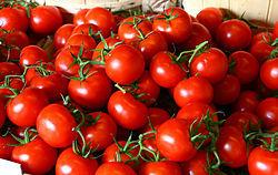 گوجه فرنگی در کدام دولت گرانتر شد؟+ جدول