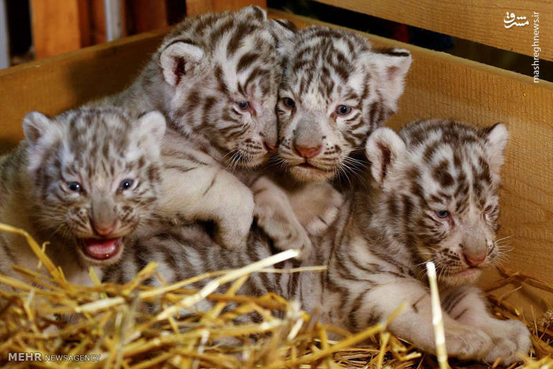 تصاویر زیبا از بچه های حیوانات