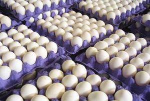 کاهش چشمگیر قیمت تخم مرغ در بازار