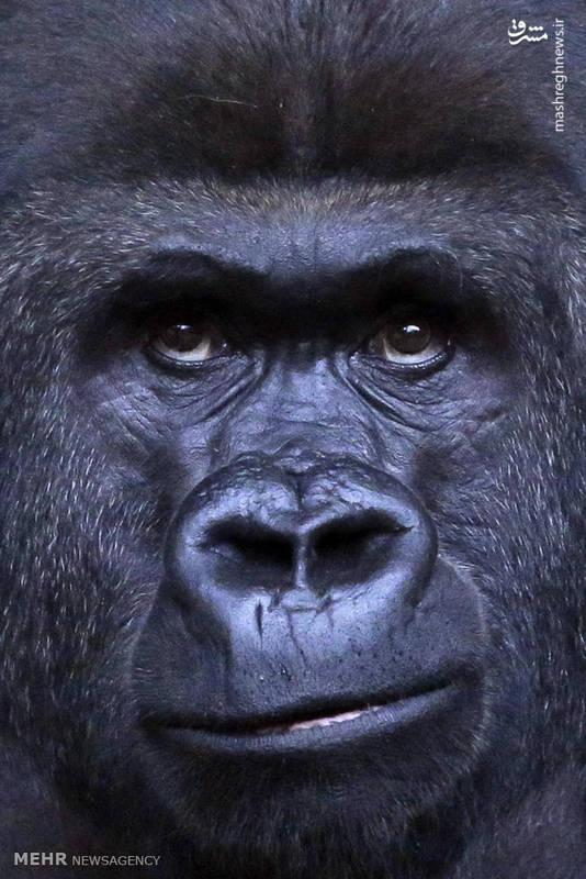 چشم در چشم حیوانات