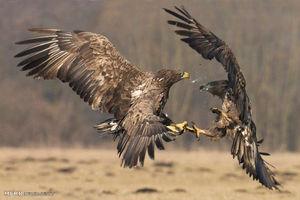 حیوانات در حال شکار