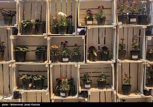 عکس/ نمایشگاه گل و گیاه در کرمان