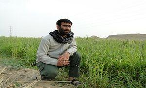 شهید محمد مسرور