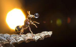 عکس/ خانه داری به سبک زنبورها!