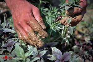 هشدار در مورد مصرف سبزیجات جنوب تهران