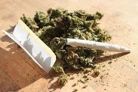 «گل» دومین مخدر مصرفی کشور