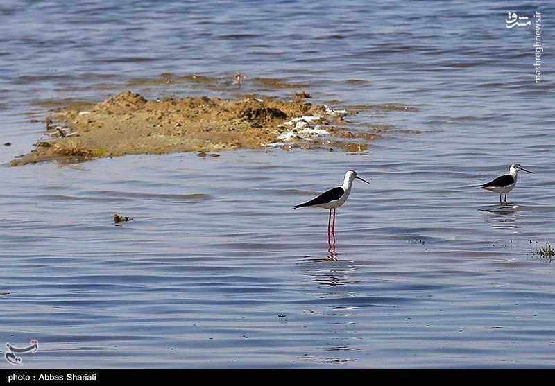 تنها تالاب فصلی در استان البرز
