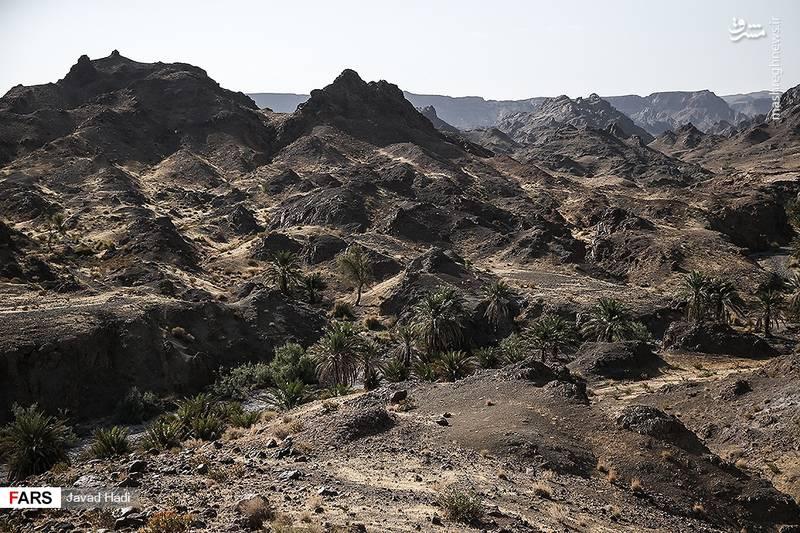 پوشش گیاهی را در اصطلاح محلی (جاز) و انبوهی و کثرت آن را (موریان) می نامند. به همین سبب این ناحیه به جازموریان معروف است. نیمه غربی این حوزه در استان کرمان و نیمه شرقی آن در استان سیستان و بلوچستان قرار دارد.