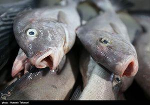 تغییر جنسیت ماهیهای نر به ماده