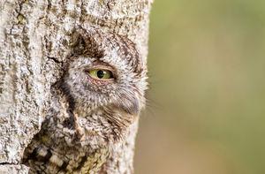 عکس/ استتار فوق العاده در حیات وحش