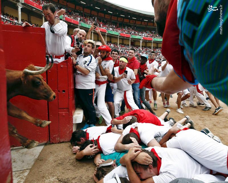 جشن گاوبازی در اسپانیا