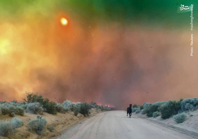آتشسوزی در مراتع کالفرنیا